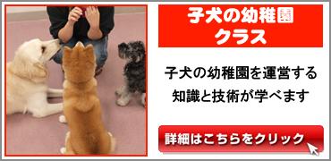子犬の幼稚園.jpg