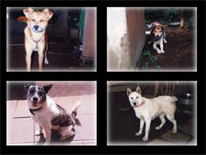 kano_dogs.jpg