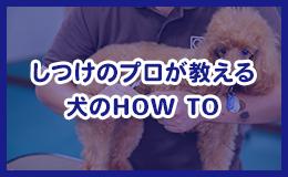 しつけのプロが教える 犬のHOW TO